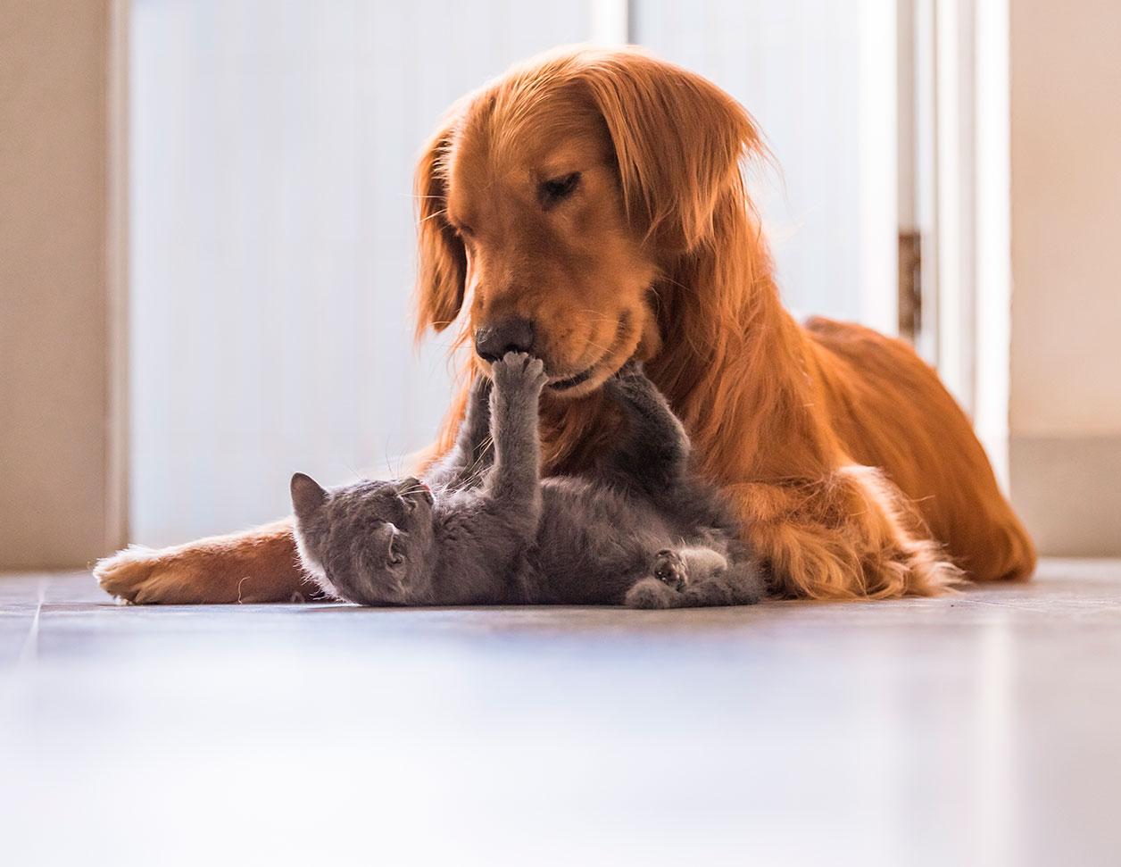 Kako-zaustaviti-dijareju-kod-pasa-Vetbion-probiotik-za-pse